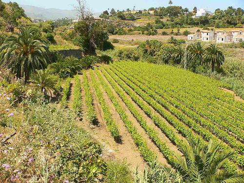 La agricultura se suele presentar en pequeña escala en muchas de las islas del continente